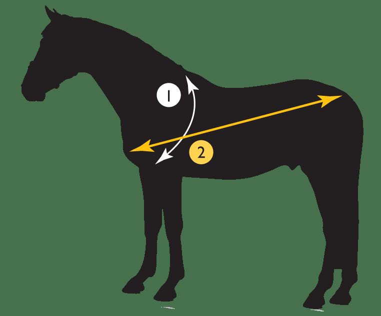 diagram voor berekenen hoeveelheid voer voor een paard